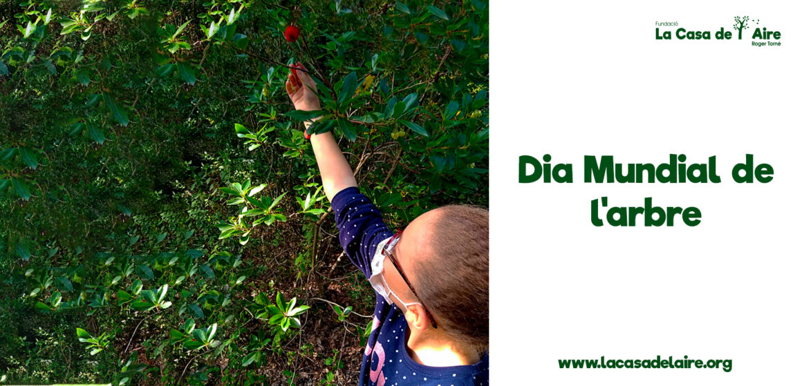 Dia mundial de l'arbre