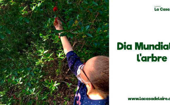 Dia Mundial del Árbol